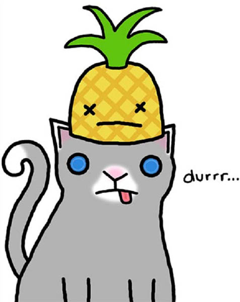 cat_pineapple_durrrr.jpg