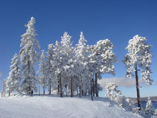 ridgeline_trees.jpg