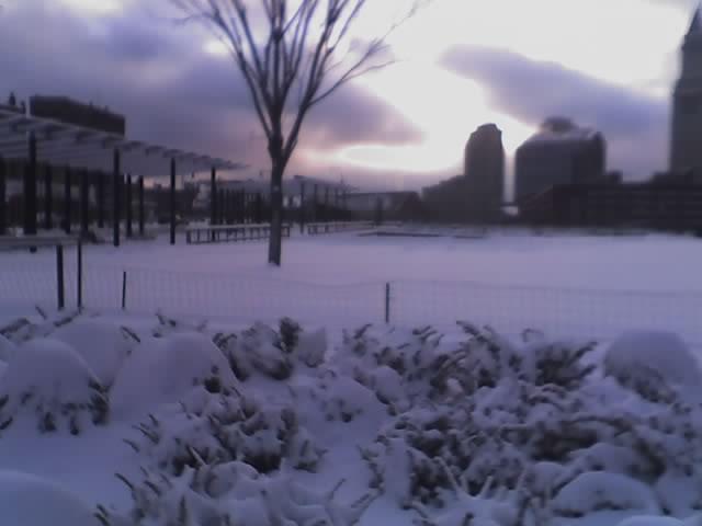 snowballz.jpeg