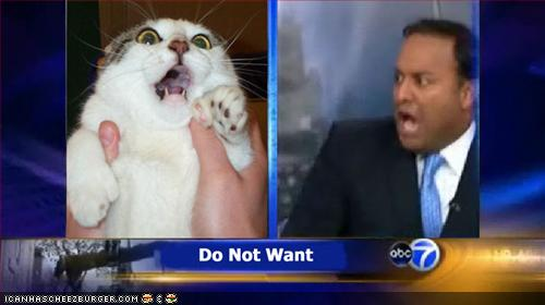 funny-pictures-zomg-cat-local-news.jpg